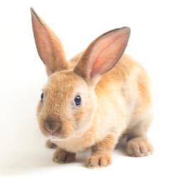 rabbit image on white background
