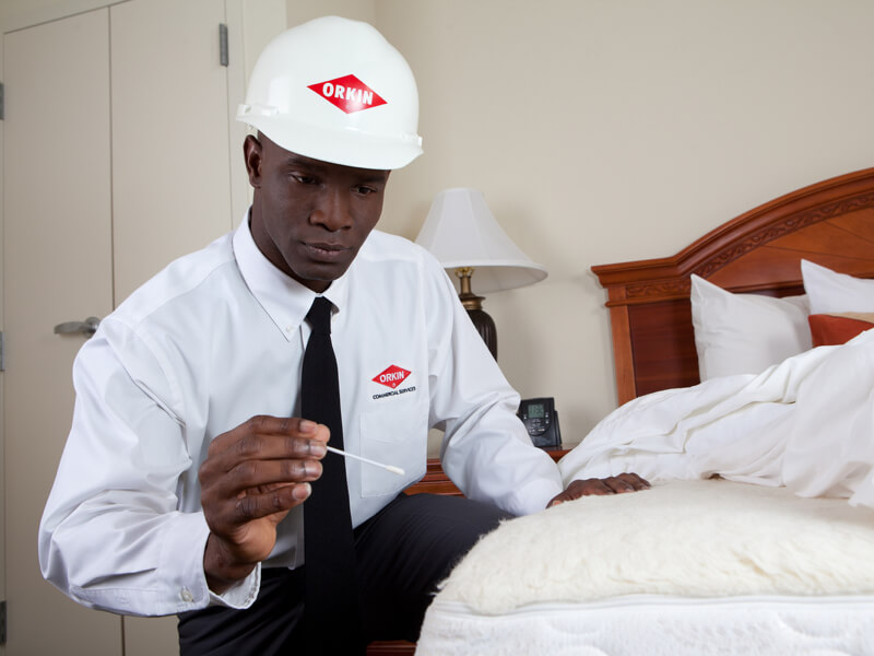 orkin bedroom inspection
