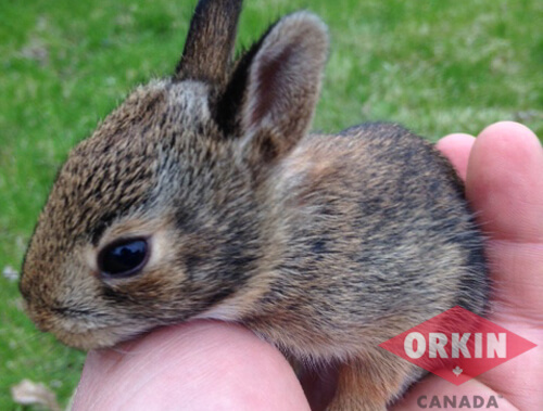 baby rabbit in a person's hand