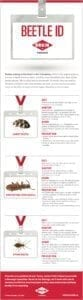 A guide to identifying beetles