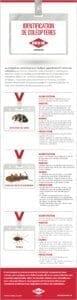 Coléoptères communs dans les domiciles