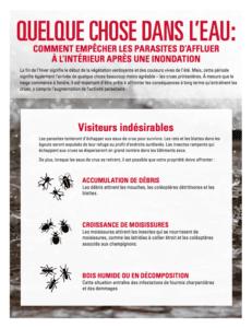 un guide prévenir les parasites après une inondation