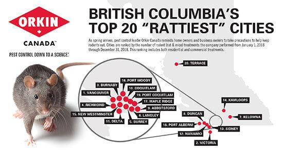 British Columbia S Top 20 Rattiest Cities 2019 Orkin