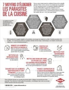 La propreté est au menu du jour : comment éloigner les parasites de la cuisine