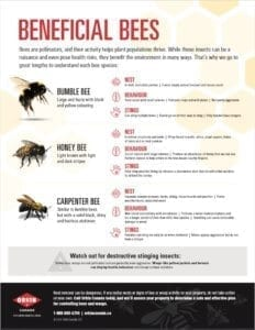 Tip sheet to identify beneficial bees