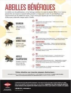 le guide pour classification des abeilles communes