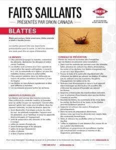 Conseils pour prévenir les blattes