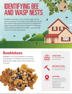 Tip sheet to identifying wasp and bee nests