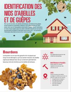 Un guide pour l'identification des nids d'abeilles et de guêpes