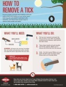 How To guide to removing ticks