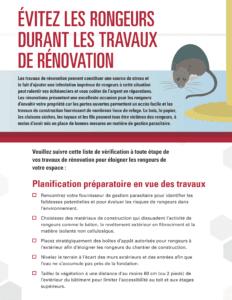 Comment éviter les rongeurs durant les rénovations