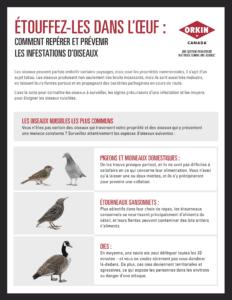 Un guide pour prévenir les infestations d'oiseaux
