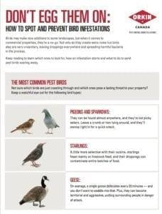 Tip sheet to spotting a bird infestation
