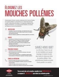un guide éloigner les mouches pollénies