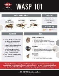 A wasp guide explaining everything you need to know.