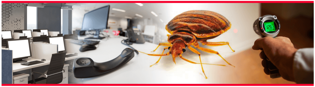 a webinar of a bed bug in the office