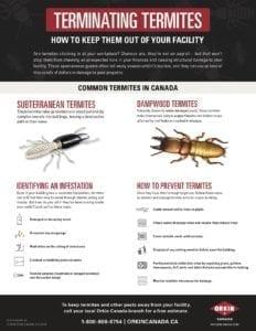 Terminating Termites Guide