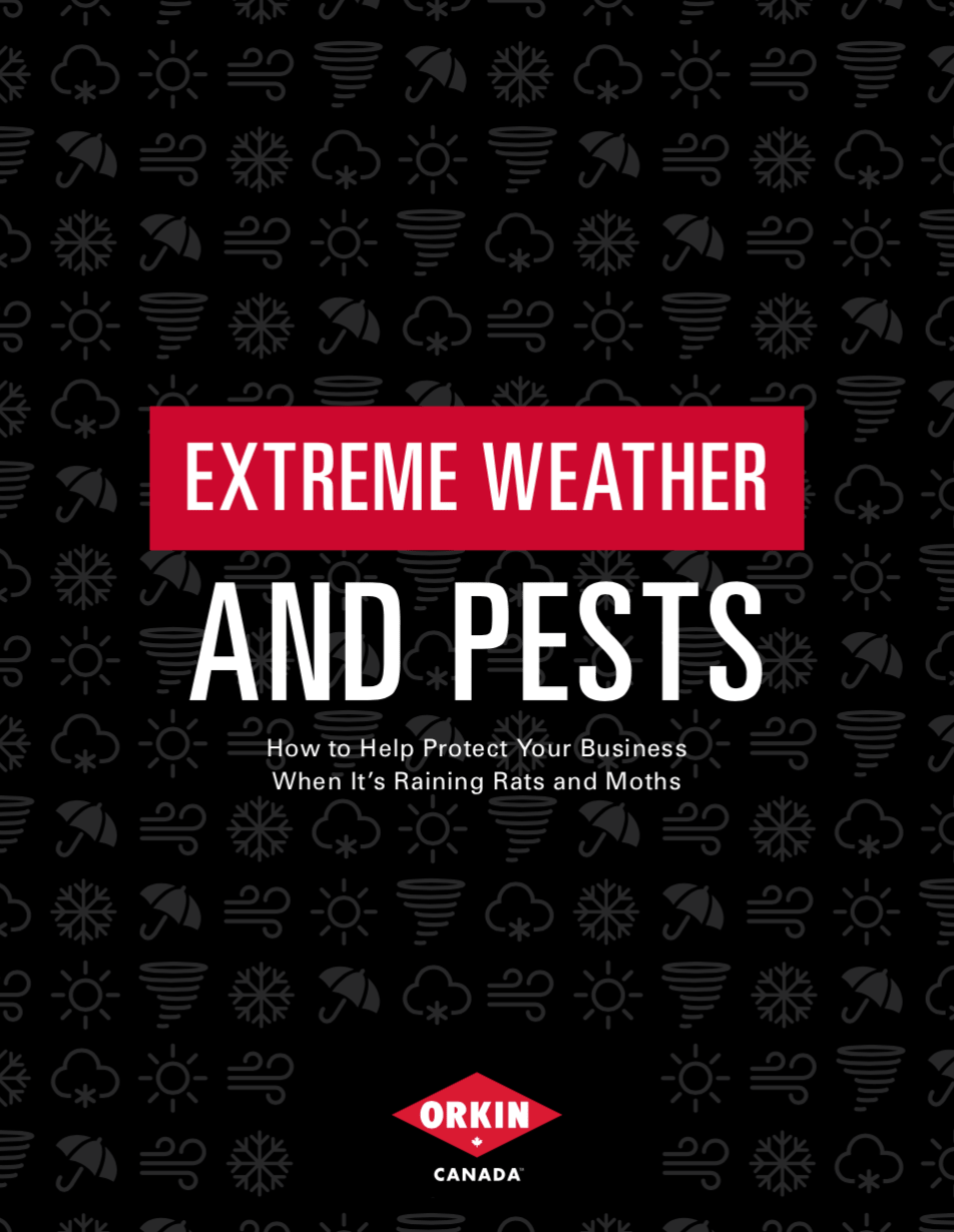 Guide to dealing with pests during extreme weather situations
