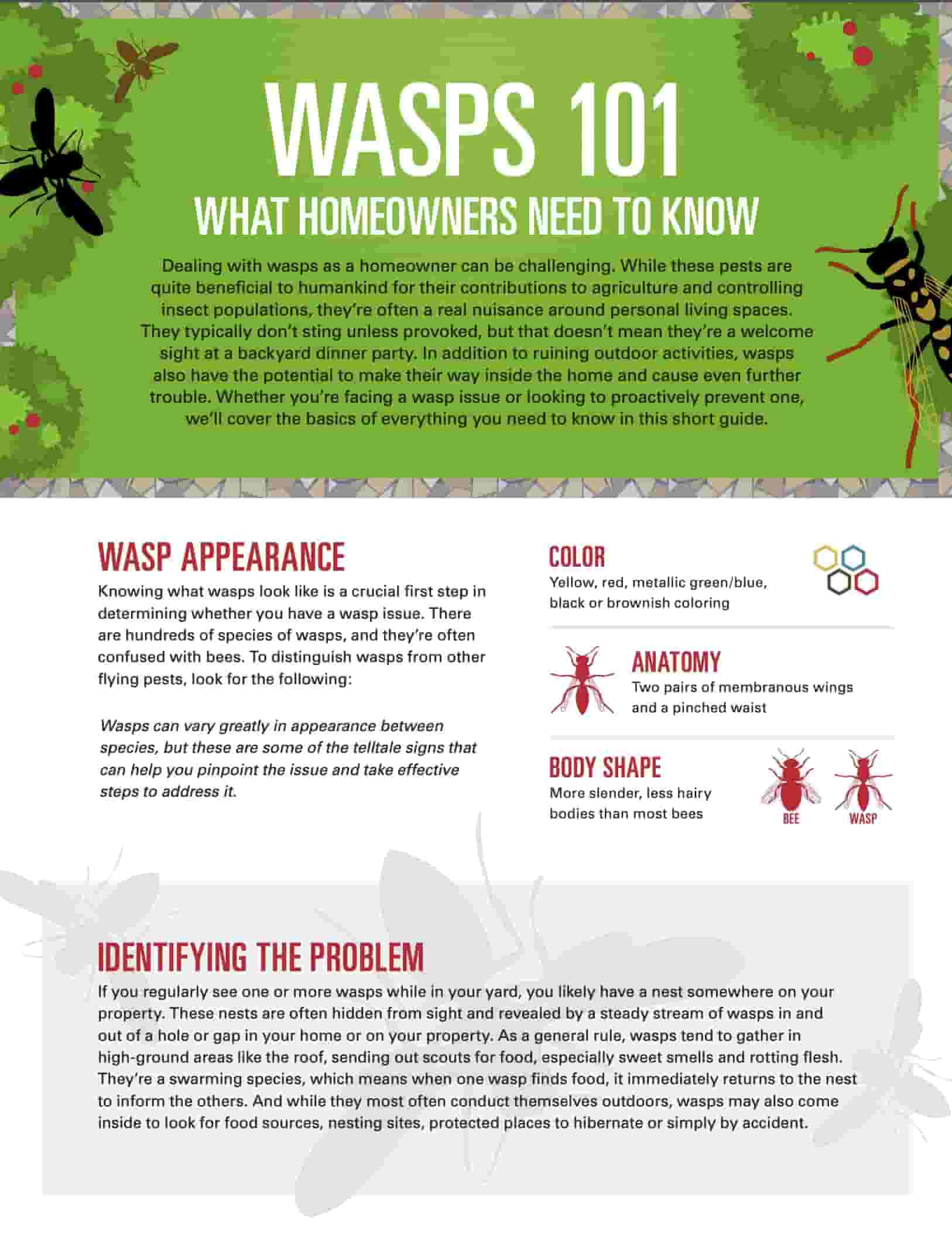 Homeowners guide to keeping wasps at bay