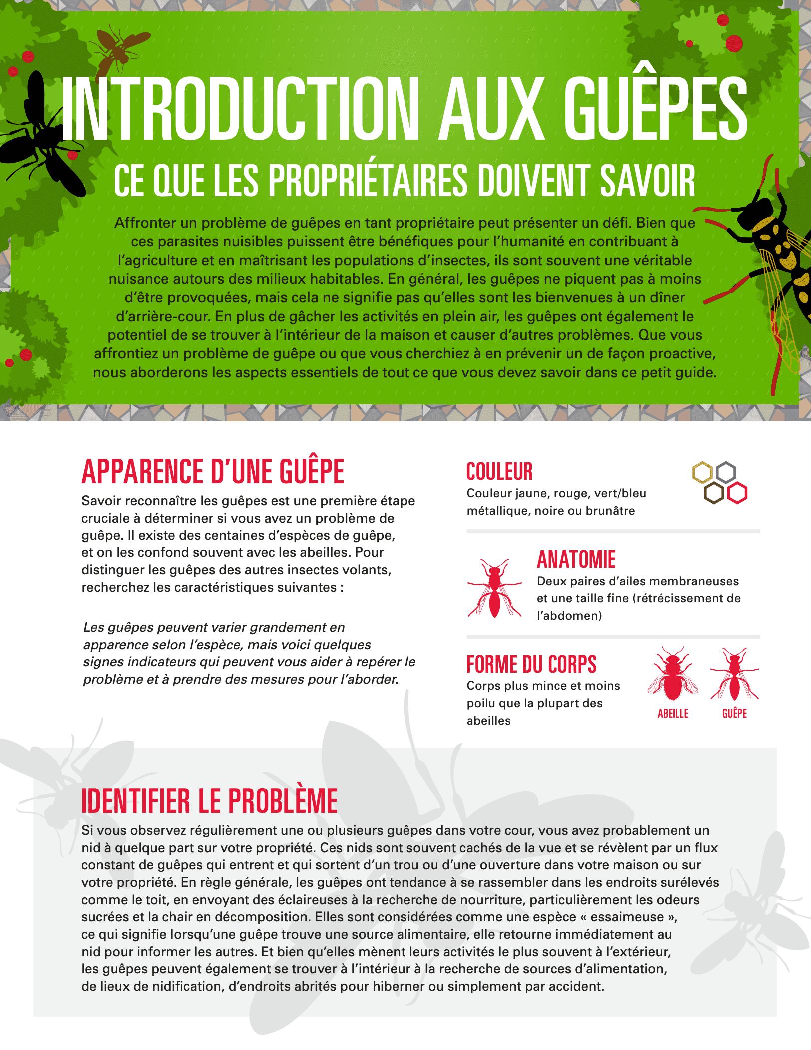 Un guide pour comprendre et prévenir les guêpes